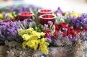 Flowers for Burn's Night