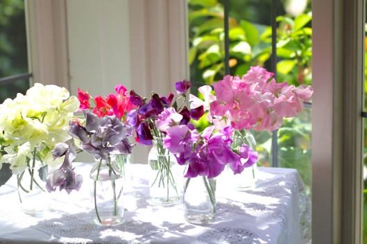 Sweet Pea Selection
