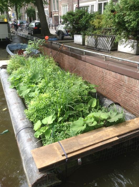 Amsterdam-Floating-Vegetable-Garden