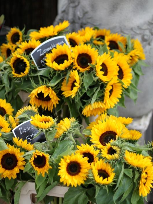 Sunflowers-in-Amsterdam