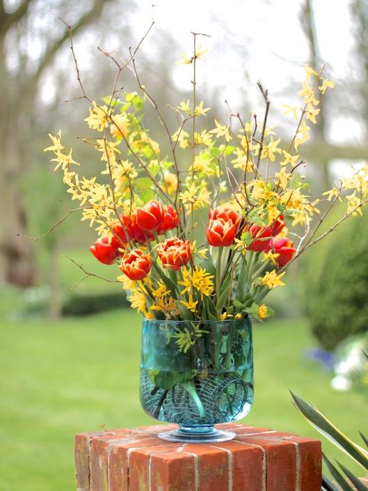 Tulip-Cilesta
