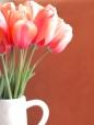 Tulip-Apricot-Impression