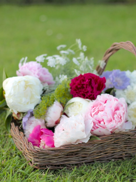 Cutting-Garden-Peonies