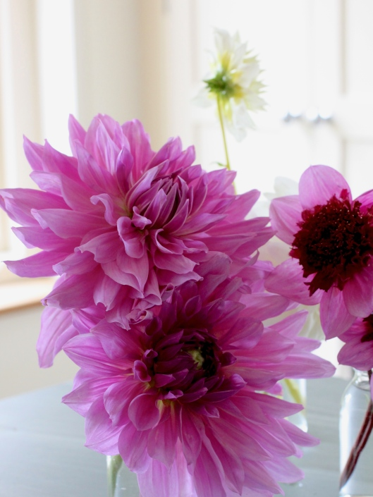 Dahlia-Blue-Bayou-and-Lilac-Time