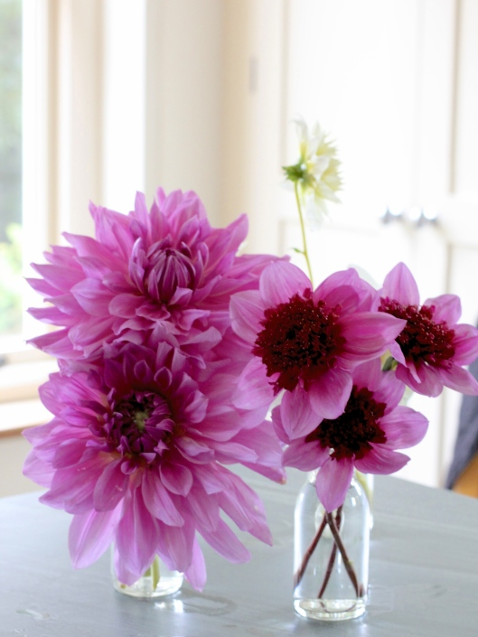 Dahlia-Lilac-Time-and-Blue-Bayou