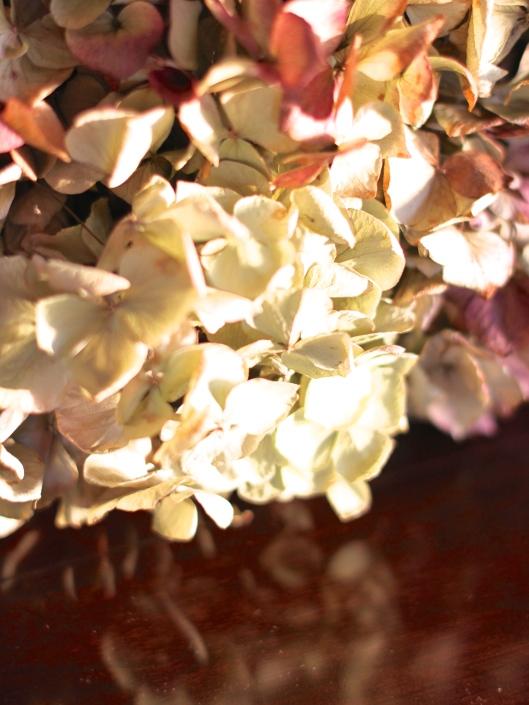 Dried-Hydrangea