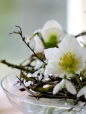 Hellebores-Snowdrops-and-Hawthorn
