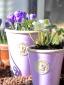 Iris-Crocus-and-Hellebores