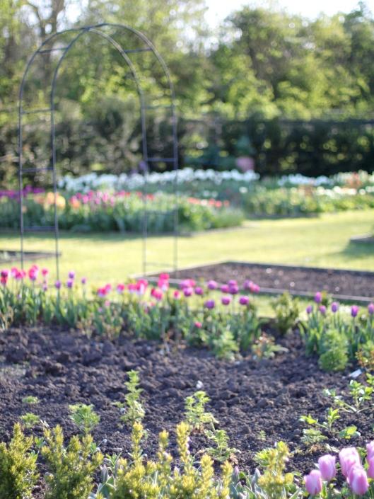 Cutting-Garden-April.jpg