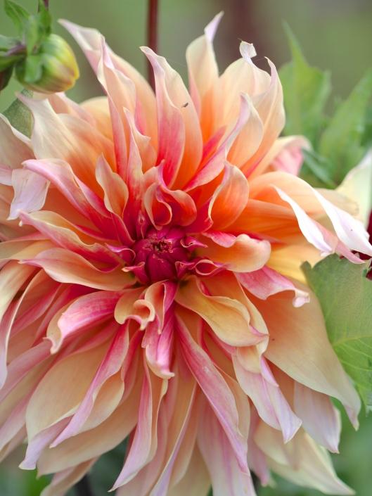 Cutting-Garden-Review-August.
