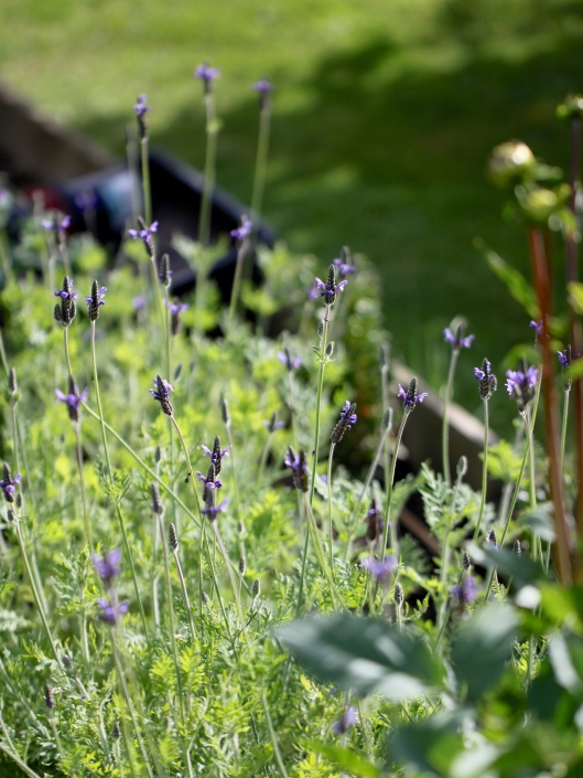 Cutting-Garden-Review-August