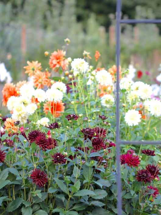 The-Cutting-Garden-September